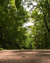 A close up of a dirt road in the woods Royalty Free Stock Photo