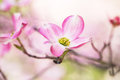 Close Up Dogwood Tree Bloom in Great Smoky Mountains