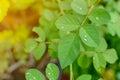 Close-up Droplet on green leaf forest pattern