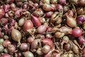 Close up of drying colorful home-grown onions Allium cepa on net dryer background. Heap of natural dried variety colors onions Royalty Free Stock Photo