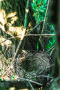 Close up empty birds nest in the tree Royalty Free Stock Photo
