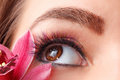 Close up of eyelash extensions Royalty Free Stock Photo