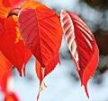 Close up of fall foliage