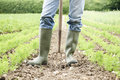 Close Up Of Farmer Working In Organic Farm Field Royalty Free Stock Photo