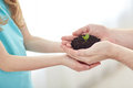 Close up of father and girl hands holding sprout Royalty Free Stock Photo