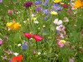 Close-up of field of meadow flowers
