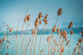 Close up flower grass on blue sky and river background Royalty Free Stock Photo