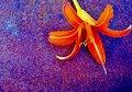 Naranja lirio borroso