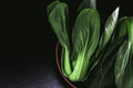 close up Fresh baby green bok choy in bowl on the  black backgro Royalty Free Stock Photo