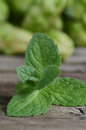 Close up fresh green peppermint leaves. Mint herbs on vintage wooden table. Royalty Free Stock Photo