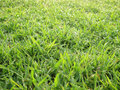 Close up of fresh morning dew on spring grass Royalty Free Stock Photo