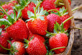 Close up fresh strawberry Royalty Free Stock Photo