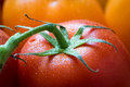 Close up of a fresh wet red tomato with leaves Royalty Free Stock Photo