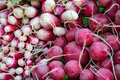 Close-up of freshly harvested red and white radishes. Royalty Free Stock Photo