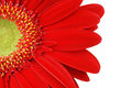 Close up front face gerbera daisy white Stock Photo