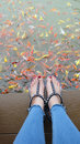 Close Up on Girl`s Feet Wearing Silver Sandals and Red Nails with Fancy Carp Swimming in The Pond Background Royalty Free Stock Photo