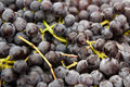 Close Up of Grapes Royalty Free Stock Photo