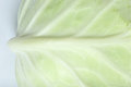 Close up green cabbage with white background Stock Photography
