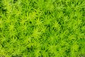 Close up of green grass in the early morning