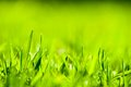 Close up of green grass with focus point. Royalty Free Stock Photo