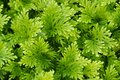 stock image of  close up green grass in park background- Image.
