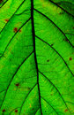 Close up of green leaf Stock Photo