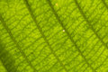 Close up of green leaf Stock Images
