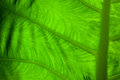 Close up green leaf to detail a Stock Images