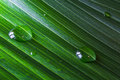 Close-up of green plant leaf with water drops background Royalty Free Stock Photo