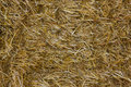 Close up of ground. Texture straw or hay