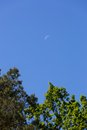 Close up of half moon on blue sky with tree branches