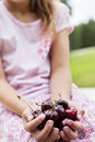 Close-up of hands full with bing cherries Stock Images