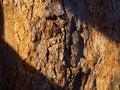 Close up hard tree trunk bark crust, warm sunlight diagonal stripe Royalty Free Stock Photo