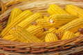 Close up of harvested corn in wicker basket Royalty Free Stock Photo