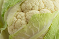 Close up of head of cauliflower Royalty Free Stock Photo