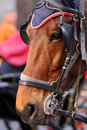 Close up of a horse in the city with eye covers Royalty Free Stock Image