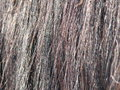 Close up of Horse Hair Royalty Free Stock Photography