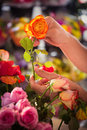 Close-up of human hand holding orange rose Royalty Free Stock Photo
