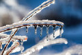 Close Up of Icicles on a Twig Royalty Free Stock Photo