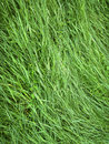 Close up image of fresh spring green grass outdoors photography Royalty Free Stock Photos
