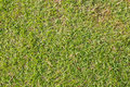 Close-up image of green grass background Stock Photos