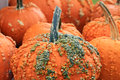 Close up image of orange decorative pumpkins Royalty Free Stock Photography