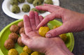 Close up of jewish woman hands maks matzah balls during the jewish holiday of passover pesach Royalty Free Stock Image