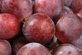 Close up of juicy ripe red grapes Stock Images