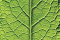 Close-Up of Leaf Royalty Free Stock Photo