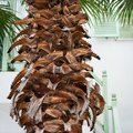 Leaf bases on the trunk of a palm tree. Royalty Free Stock Photo