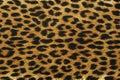 Close up leopard spot pattern Royalty Free Stock Photo