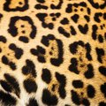 Close up leopard spot pattern texture Royalty Free Stock Photo