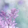 Close up little pink flowers image elements watercolor painting Stock Photography