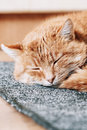 Close up of lovely red cat curled up and sleeping funny in his bed Stock Photos